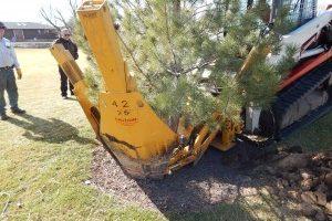 Moving BIG trees in Farmington, Utah