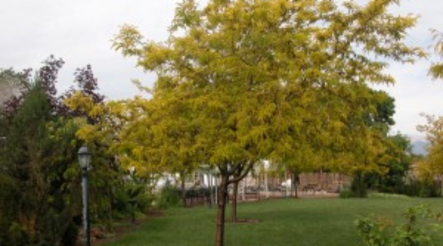 The value of mulching your trees