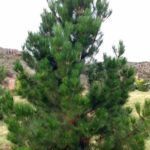 best trees to plant in utah