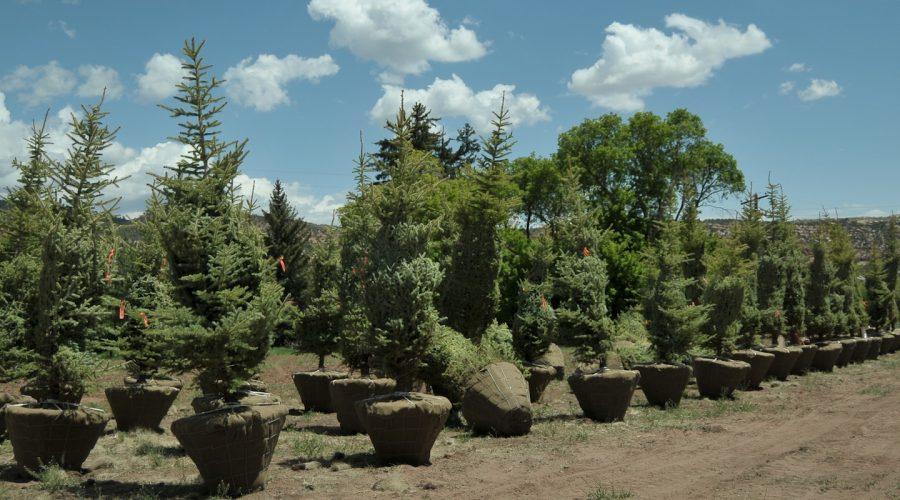 Best Trees to Plant in Utah