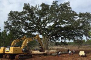 Large Tree Moving